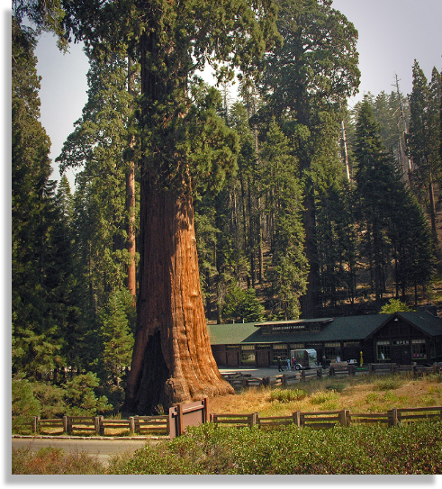 Sequoia Bed and Breakfast
